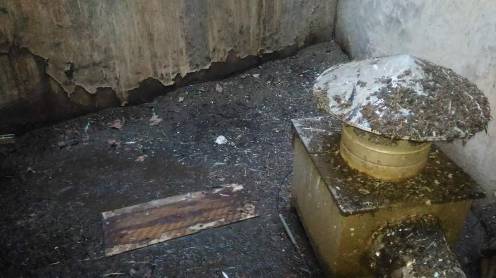 Nettoyage Et Desinfection Excrements De Pigeons Avignon 84