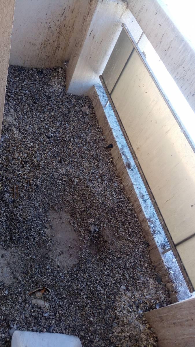 Nettoyage D Excrements De Pigeons Sur Un Balcon A Marseille 13